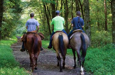 Horses in Kentucky - horseback riding on trail