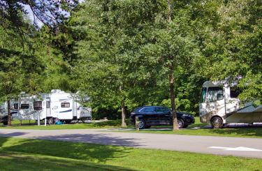 rvs lined up among trees